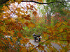 Nicolet National Forest    Photo Assignment: Weekend 9/29