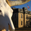 Bleached Longhorn/The Old 1886 Blanco County Texas Courthouse