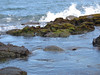 A turtle hiding in rocky waters of The Big Island of Hawaii