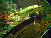 Aquarium  Cabella store West Bend Wisconsin