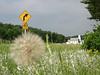 Vermont Scenery Rural western Wisconsin  Photo Note:  My BMW GS is hidden behind the dandelion